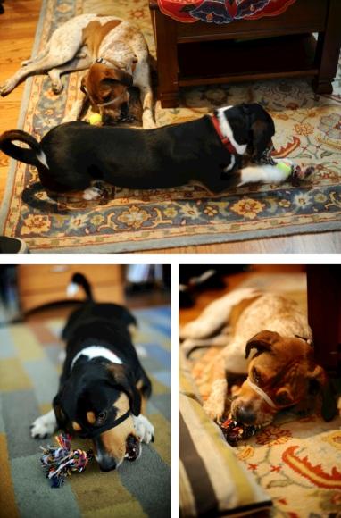 doggo presents