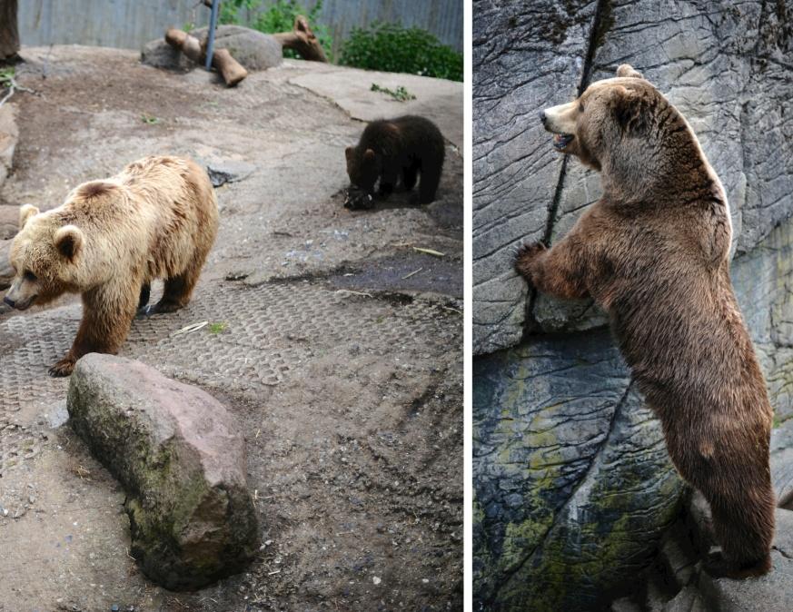 mama, baby and papa bear