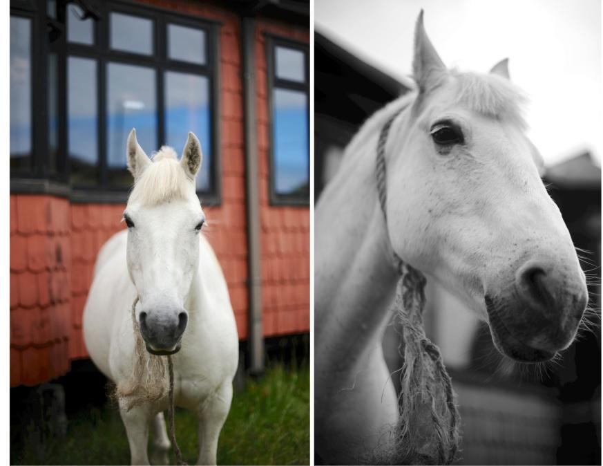tornado the horse