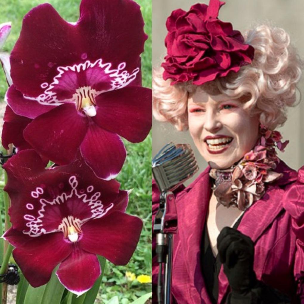 Effie Trinket Orchid